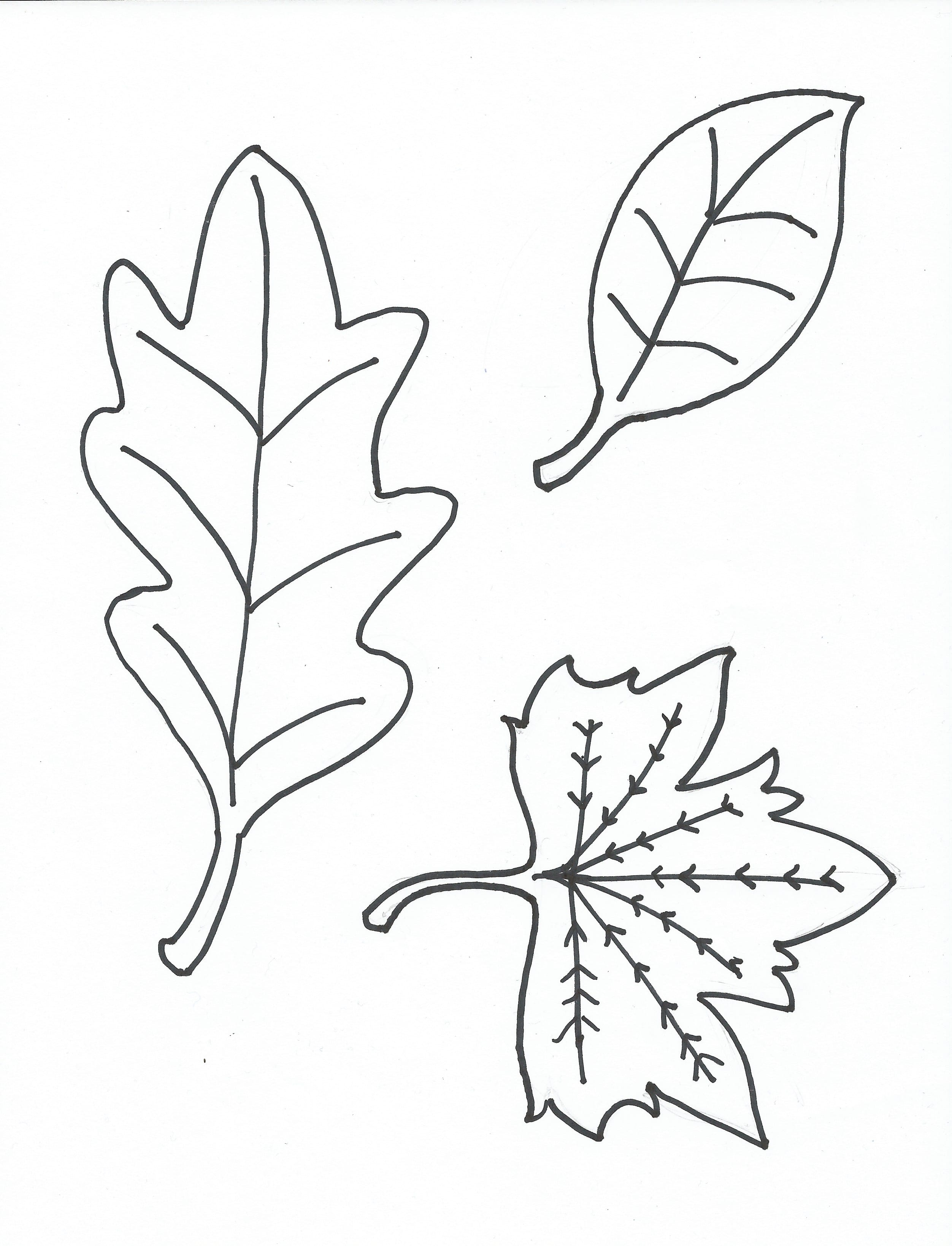 free printable coloring page leaves - Free Coloring Papers