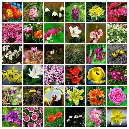 spring flowers yo free samples money saving blog
