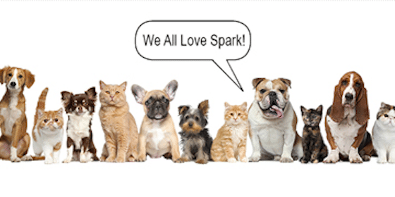 FREE Rocky & Bella Spark Pet Supplement Sample