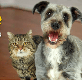 FREE to Donate: Iams Home 4 the Holidays
