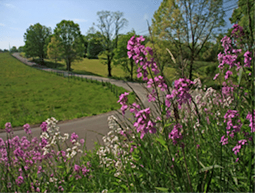 FREE 2013 Roadsides in Bloom Calendar