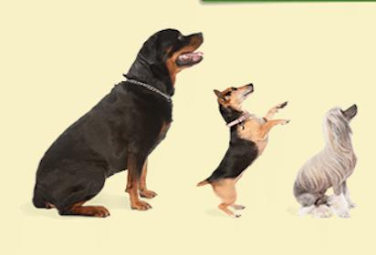 $10 DoggyLoot.com Credit