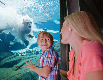 SeaWorld San Diego and Orlando Admission for Teachers