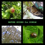 Free Nature Guides for Kindle
