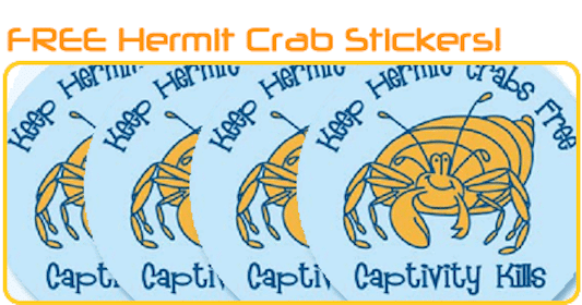 PetaKids Hermit Crab Stickers