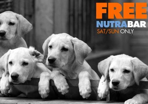 Nutrabar Dog Treat Sample