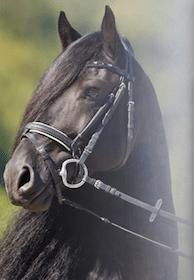 Iron Spring Farm Stallion DVD