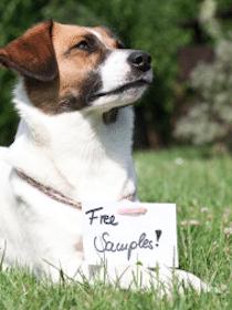Nashville Dog Treat Sample