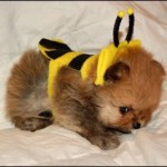 Cute Halloween Pets
