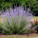 5 Easiest Perennials Ever
