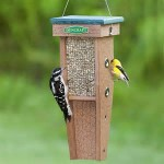 Bird Feeding Tips