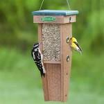 Bird Feeding Tips