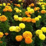 Planting Annuals 101