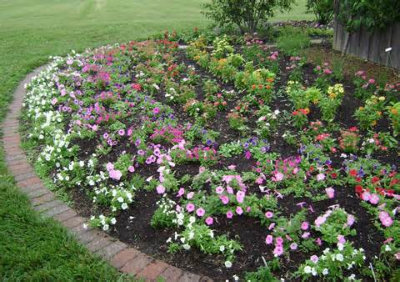 Planting annuals 101 yo free samples for Free rose garden designs