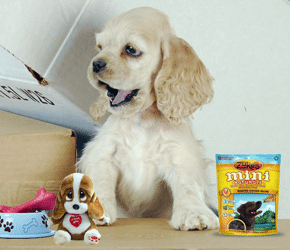 Free Dog Treats & Toys for Referring Friends