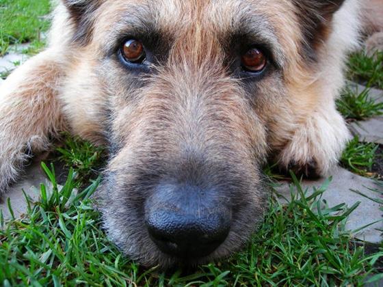 dog7 (2)