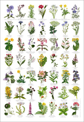 FREE Wildflower Reference Guide From Wildseed Farms (US Only)