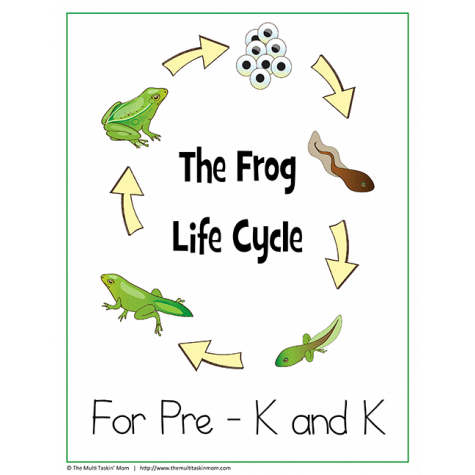 FREE The Frog Life Cycle Children's Lesson Pack From The Multi Taskin Mom
