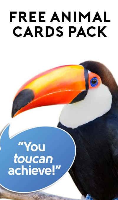 FREE ZooZingo Animal Cards (Teachers / Schools Only)