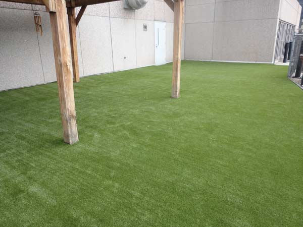 FREE Carolina Artificial Lawns Sample