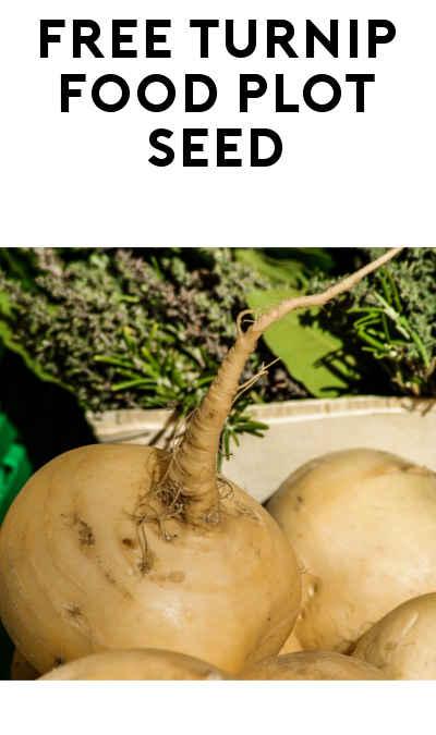 FREE Triple Forage Turnips From Boneyard Seed