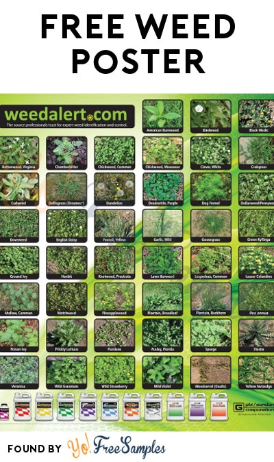 FREE Weed Alert Poster [Verified Received By Mail]