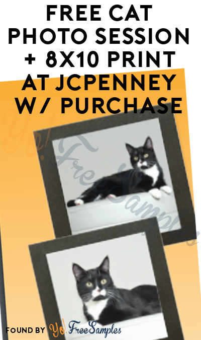 FREE Cat Photo Session + 8×10 Print At JCPenney With Arm & Hammer or Feline Pine Cat Litter Purchase