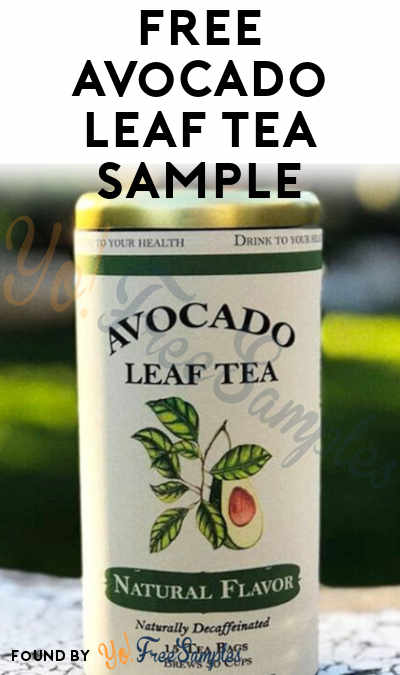 FREE Handcrafted Avocado Leaf Tea Sample