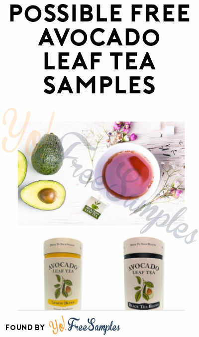Possible FREE Avocado Leaf Tea Samples (Waitlist)
