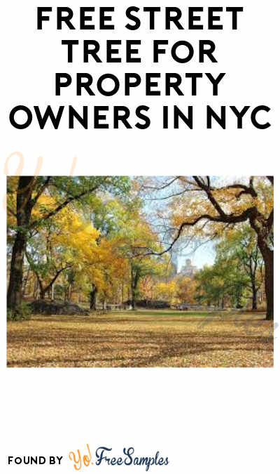 FREE Street Tree for Property Owners in NYC