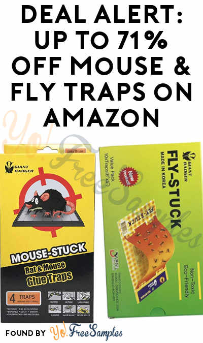 DEAL ALERT: Up to 71% Off Mouse & Fly Traps on Amazon
