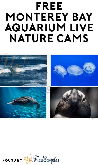 FREE Monterey Bay Aquarium Live Nature Cams