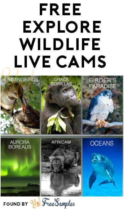 FREE Explore Wildlife Live Cams