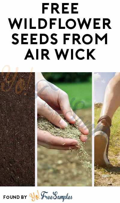 FREE Wildflower Seeds From Air Wick