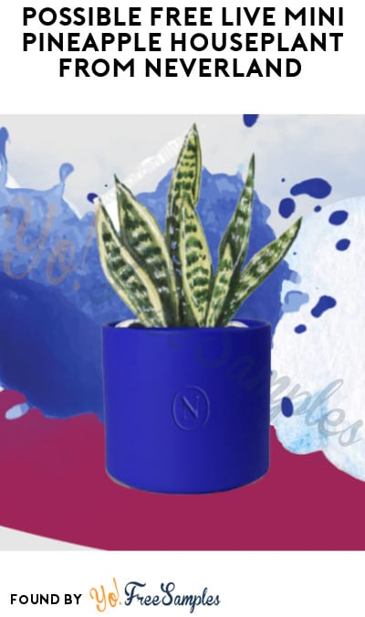 Possible FREE Live Mini Pineapple Houseplant from Neverland