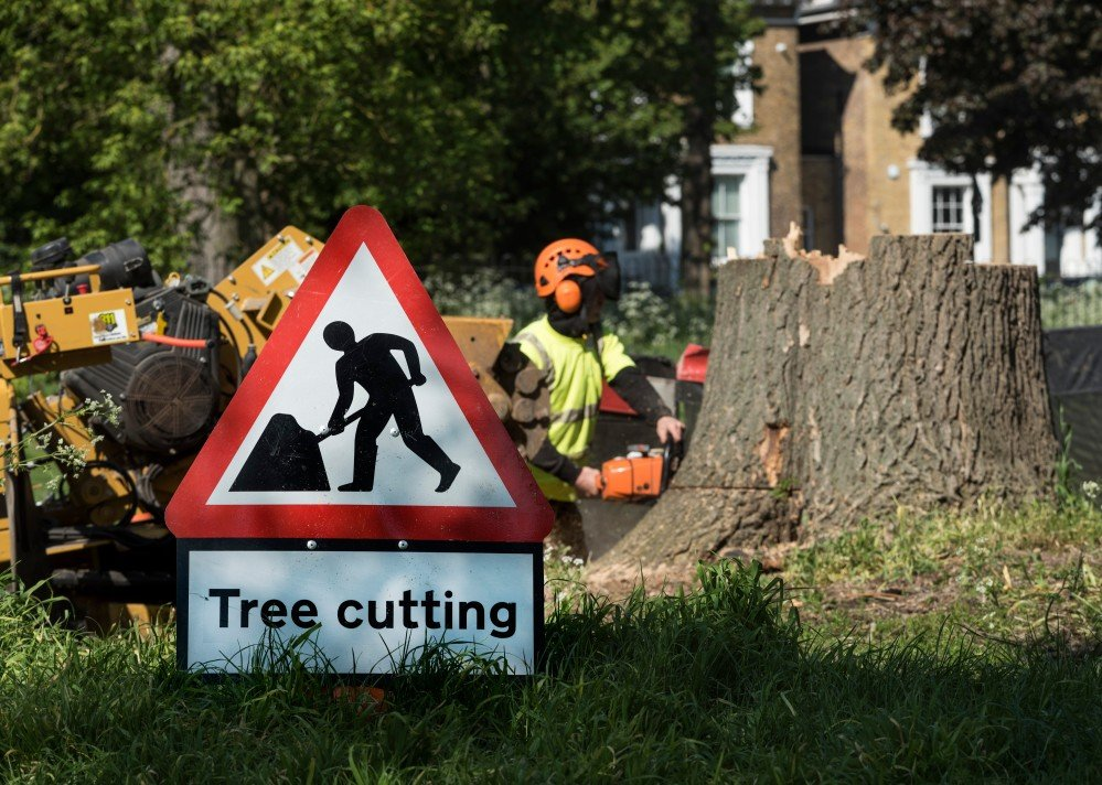 When Is the Cheapest Time of Year for Tree Removal?